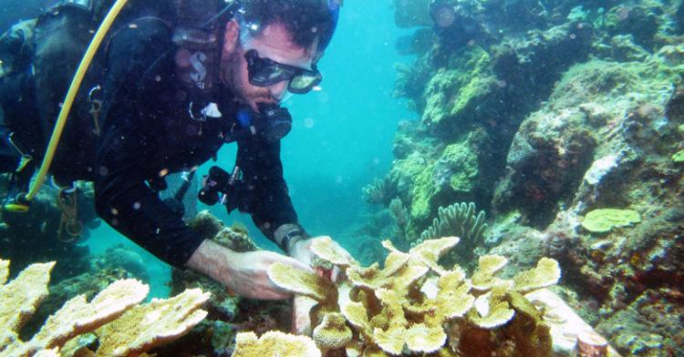 INAPESCA, al rescate del coral