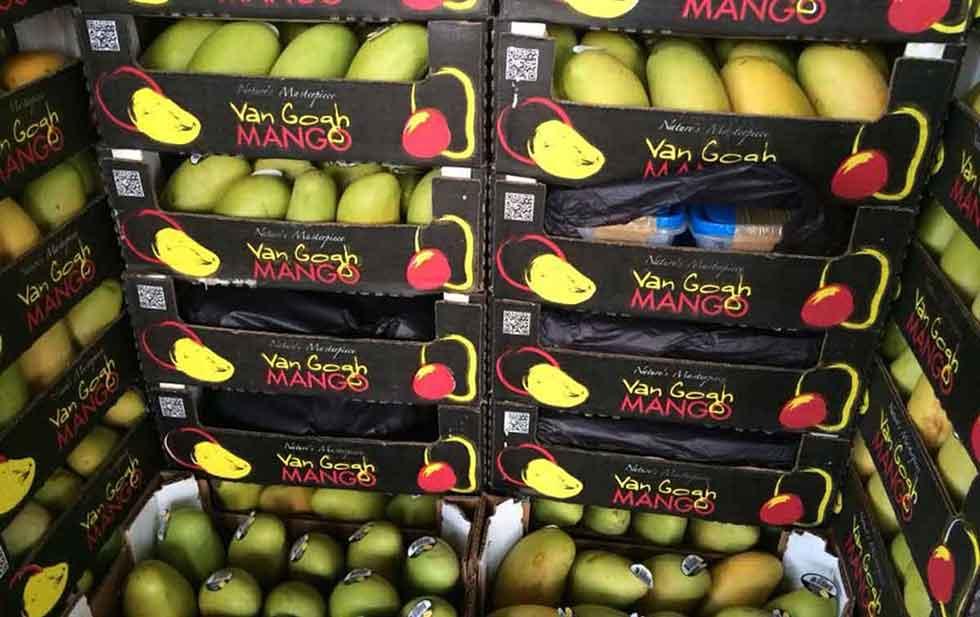 Decomisa SEDENA cargamento millonario de drogas en cajas de fruta