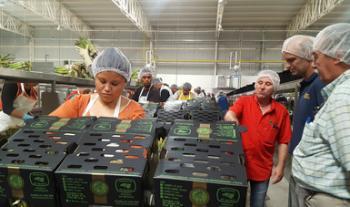 Se expande exportación mexicana de espárragos en Centro América