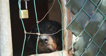 Vecinos denuncian maltrato a perros en Texcoco
