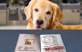 ¿Te fuiste al mundial de Rusia con tu mascota?
