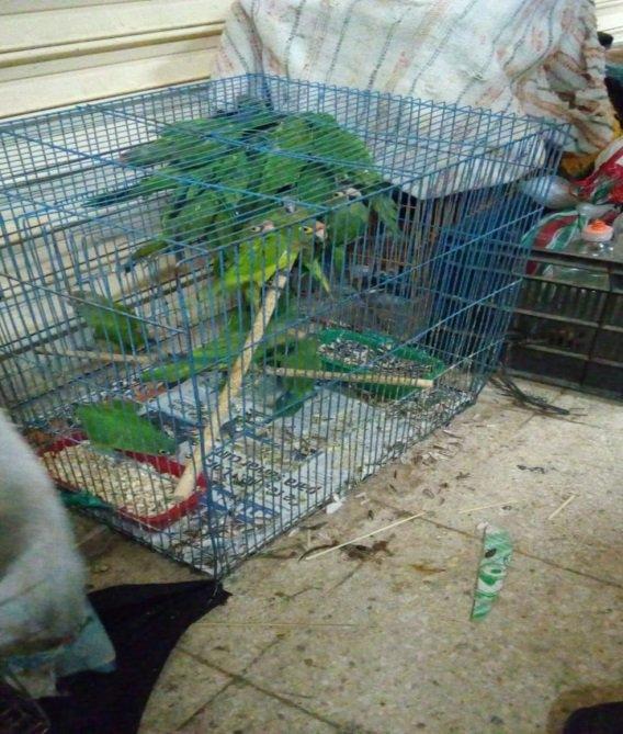 Profepa asegura 88 ejemplares de fauna silvestre en el Mercado de Sonora