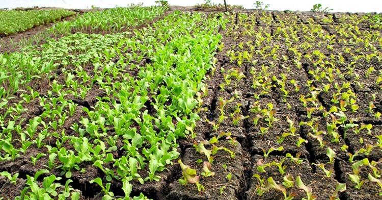Las chinampas, un antiguo y eficiente sistema de producción de alimentos
