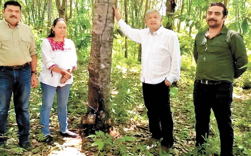 Viaja AMLO a la selva Lacandona para el programa de siembra de un millón de hectáreas