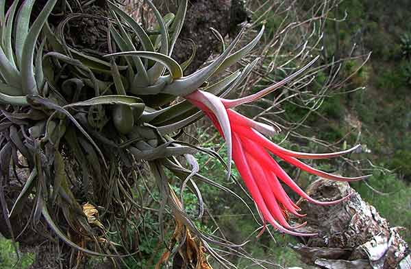 Realiza UNAM inventario de flora del Valle de Tehuacán-Cuicatlán para conservar la biodiversidad