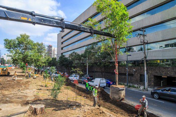 Con más de 6 mil árboles en 2 años reforesta SEDEMA a la CDMX