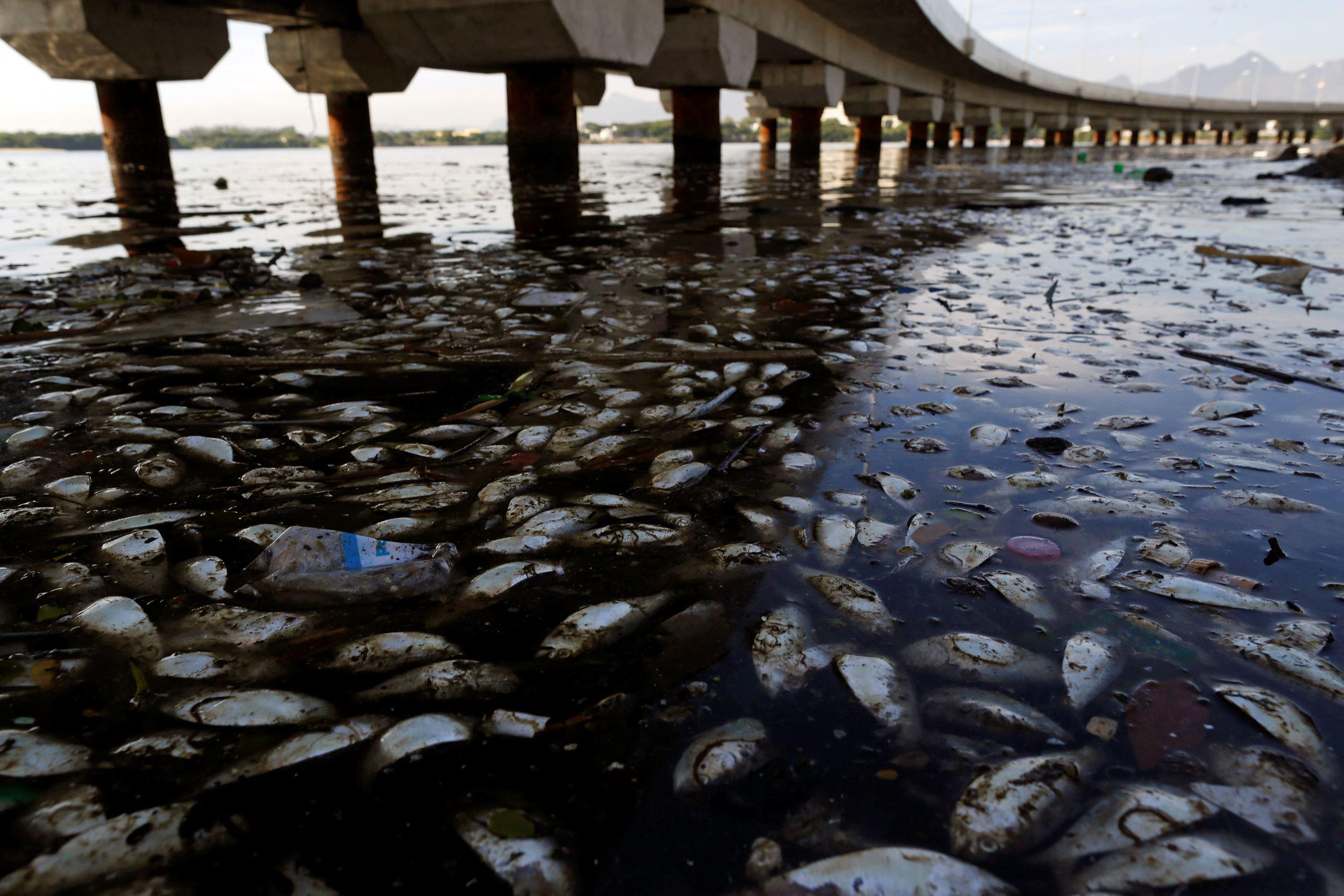 Al menos 30 mil hospitalizados por agua contaminada en Irak