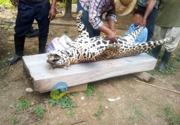 Matan a jaguar y lo presumen en redes