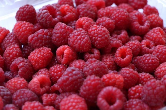 Imparte SEDEREC taller de cultivo de berrys a personas productoras de CDMX