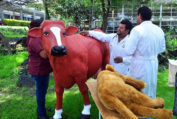 Con simuladores para atención a bovinos, potencia la UNAM formación de estudiantes