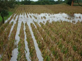 Activa Sagarpa seguros agropecuarios en Sonora y Sinaloa