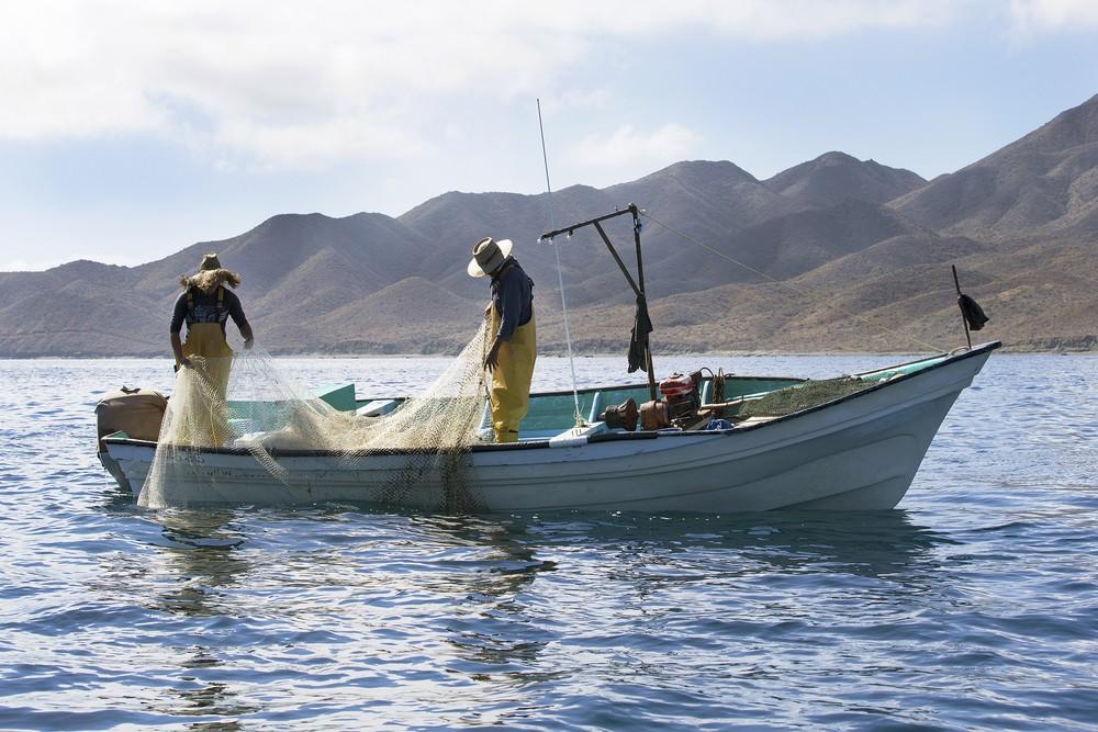 Urge establecer una Comisión de Pesca y Acuacultura en el Senado de la República