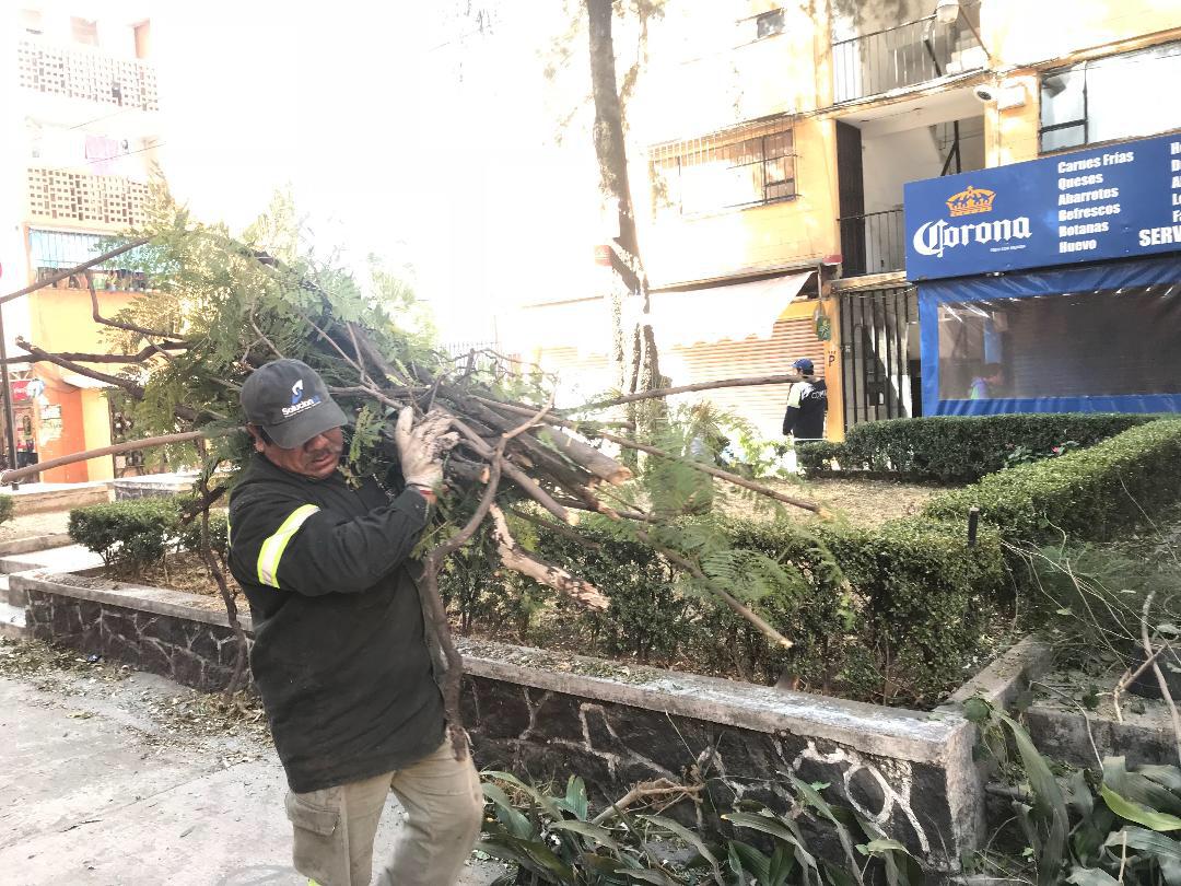 Actualiza CDMX manual de derribo de árboles