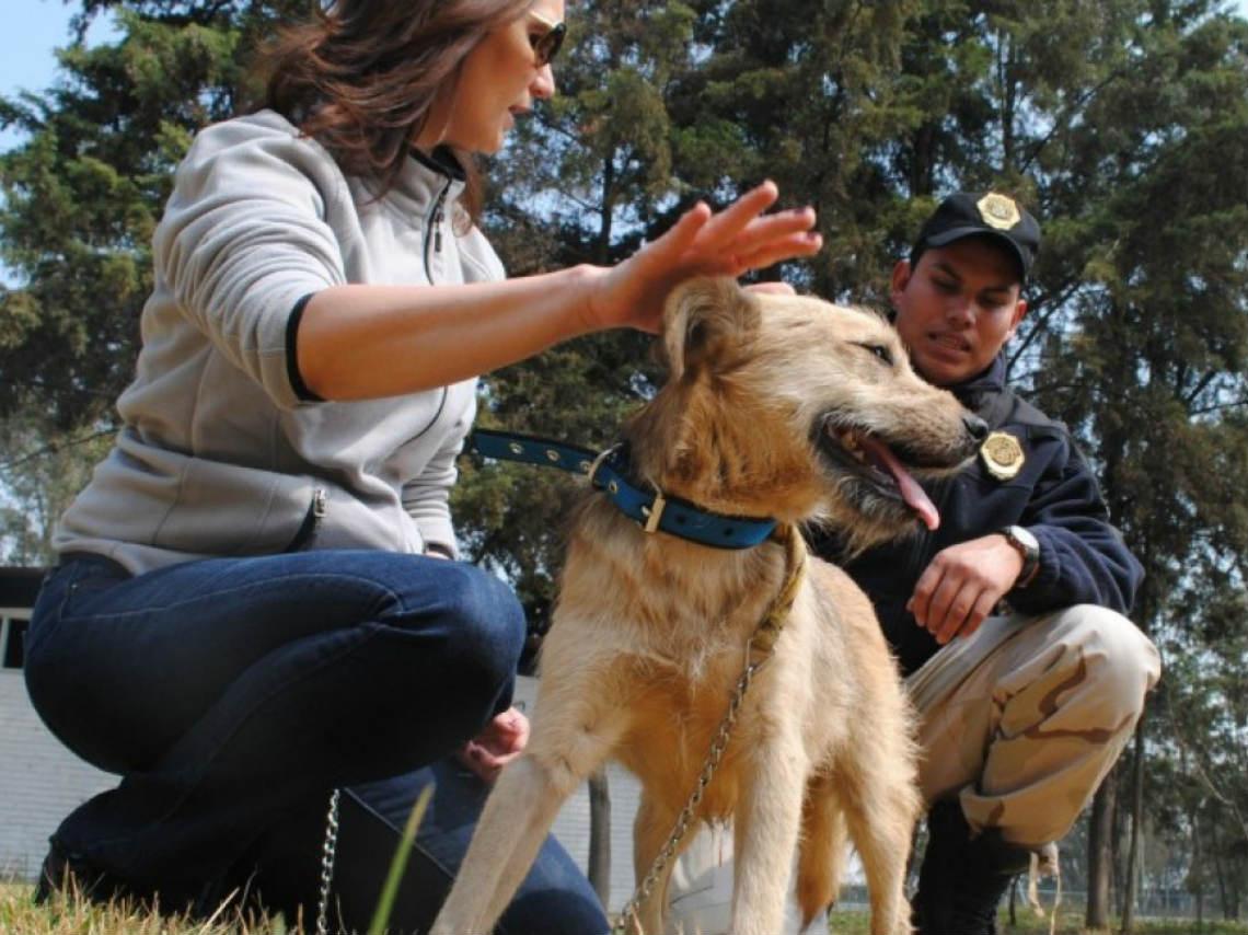 Inician brigada de vigilancia animal