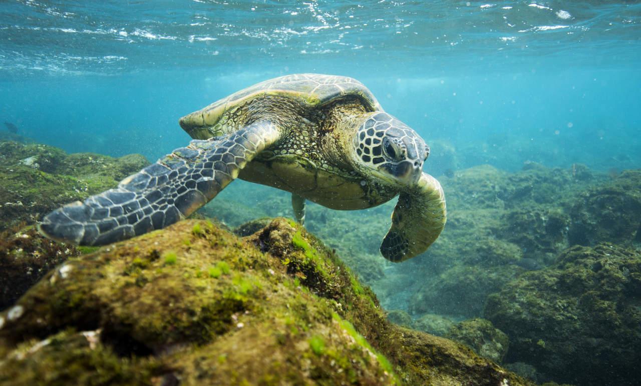Politécnicos realizan pruebas genéticas para salvar tortugas en peligro de extinción
