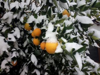 Emite Segob Declaratoria de Desastre Natural por heladas en Sonora