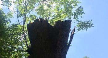 Piden poda de árboles en Benito Juárez para seguridad
