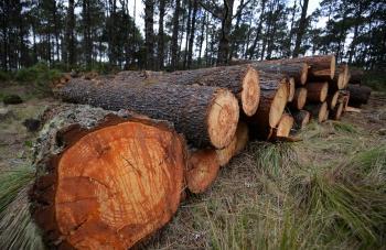 Arranca operativo permanente contra tala ilegal
