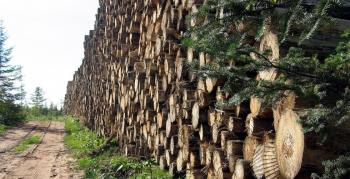 Implementan SEDENA y Gobierno de la CIiudad de México operativo permanente contra la tala ilegal