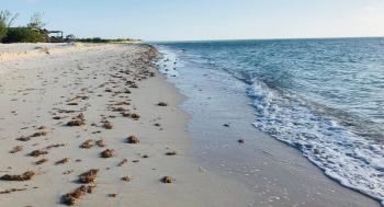 UNAM y Semarnat van por trabajo multidisciplinario para salvar las costas