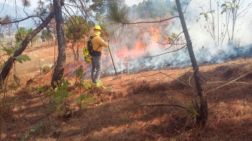 SEDEMA ha atendido 178 incendios en ocho Alcaldías