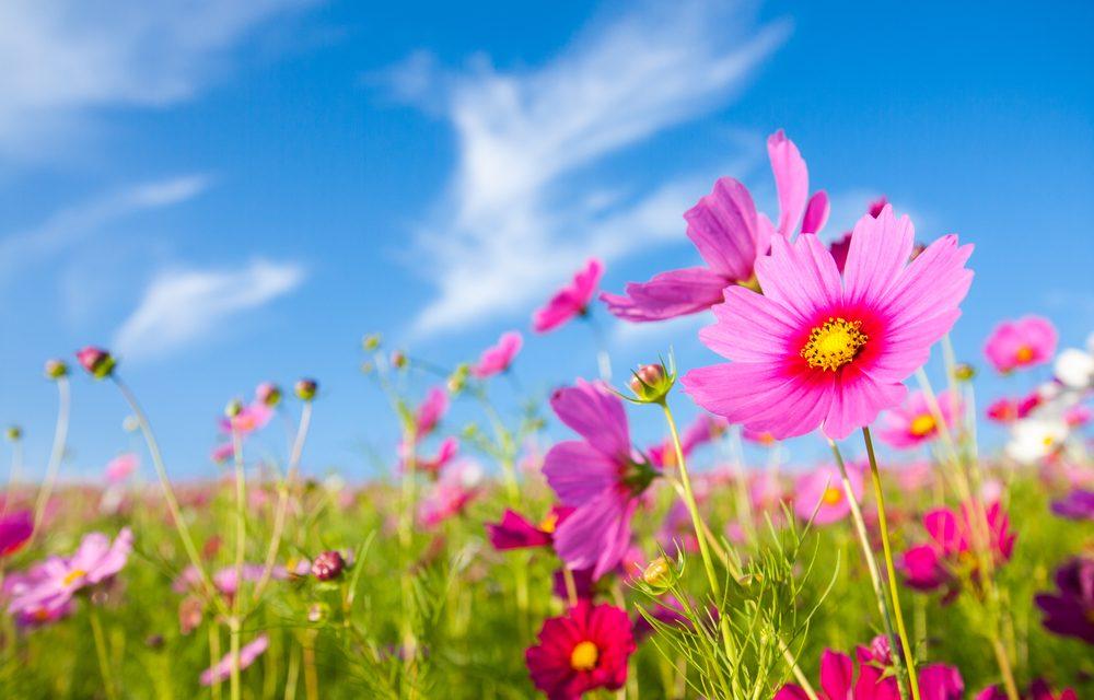 El día de hoy dará inicio la Primavera