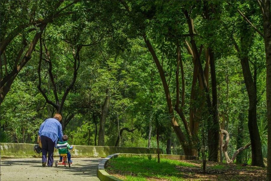 Gobierno de la Ciudad de México se suma a la defensa del Bosque de Chapultepec
