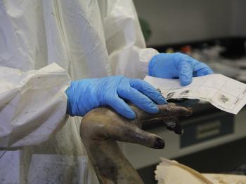 La UNAM aplica técnicas de restauración y rehidratación para identificación humana