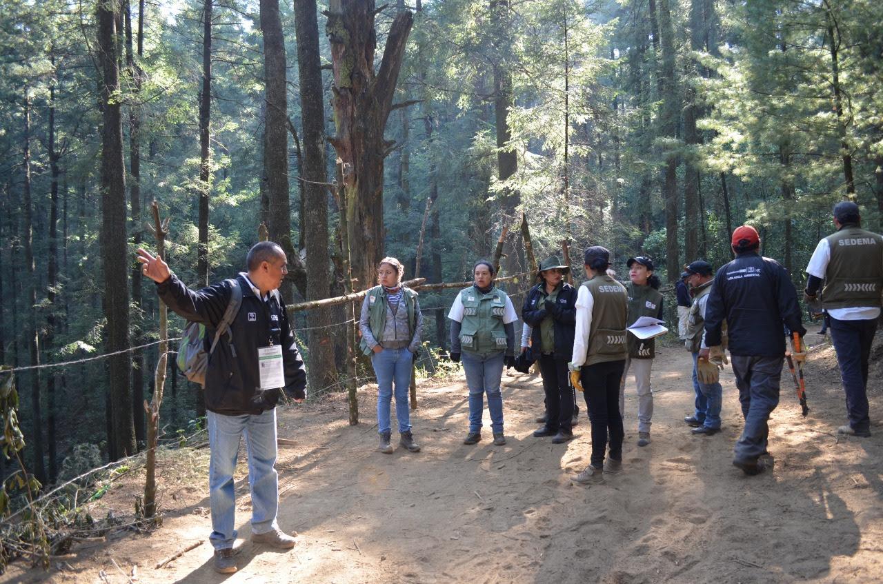 Encabeza SEDEMA operativo en zona forestal de Cuajimalpa