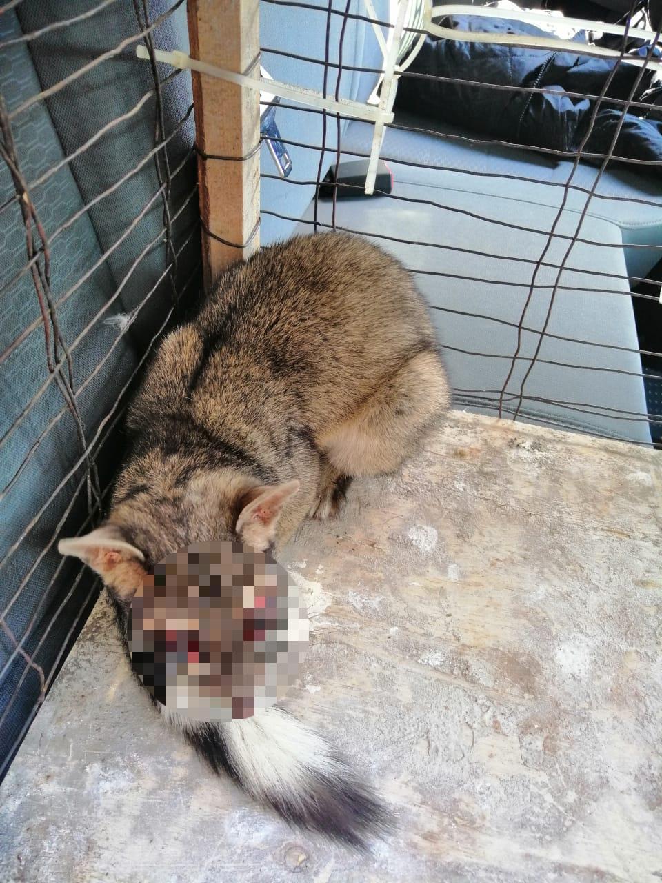 Brigada de Vigilancia Animal de la SSC acude a tres llamados de auxilio para rescatar a animales