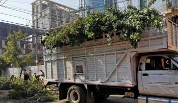 Apelará la PGJCDMX Auto de NO Vinculación a Proceso contra nueve personas relacionadas con la tala de árboles