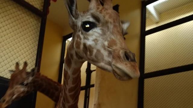 Informa Sedema medidas para proteger a los habitantes de los zoológicos