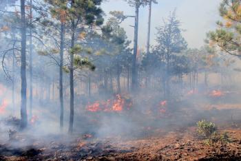 Típicos los incendios forestales registrados en el país