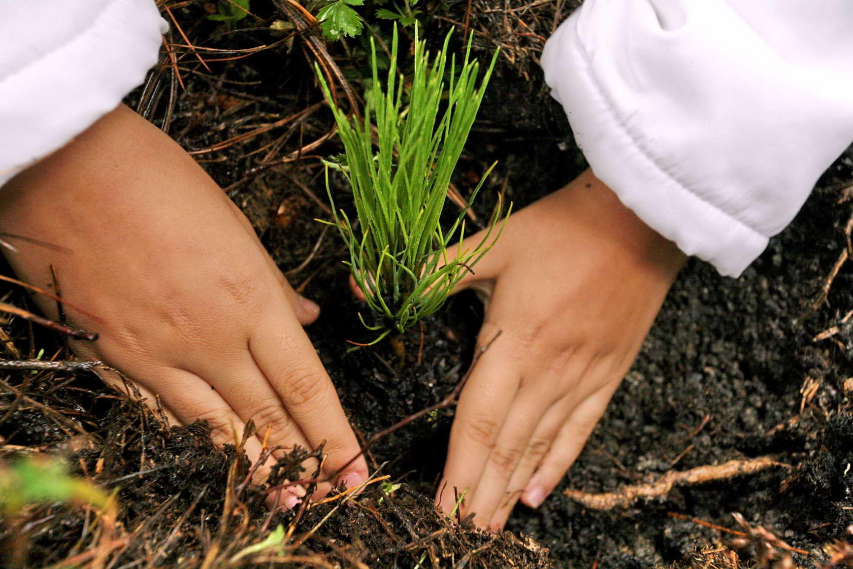 Gobierno Capitalino hace un llamado a sumar esfuerzos para lograr el Reto Verde