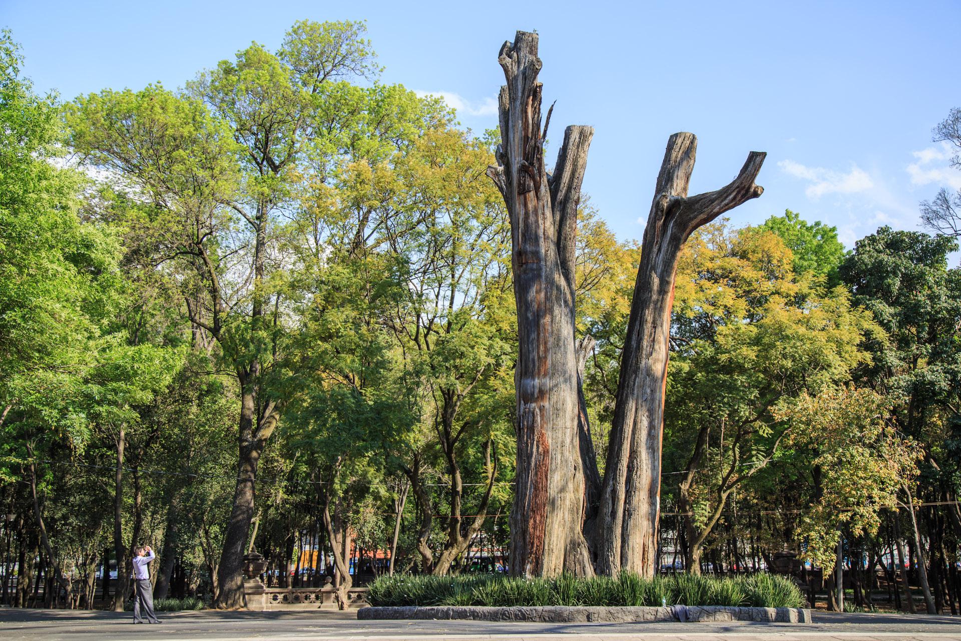 La FICA 2019 reunirá en el Bosque de Chapultepec culturas de más de 80 países