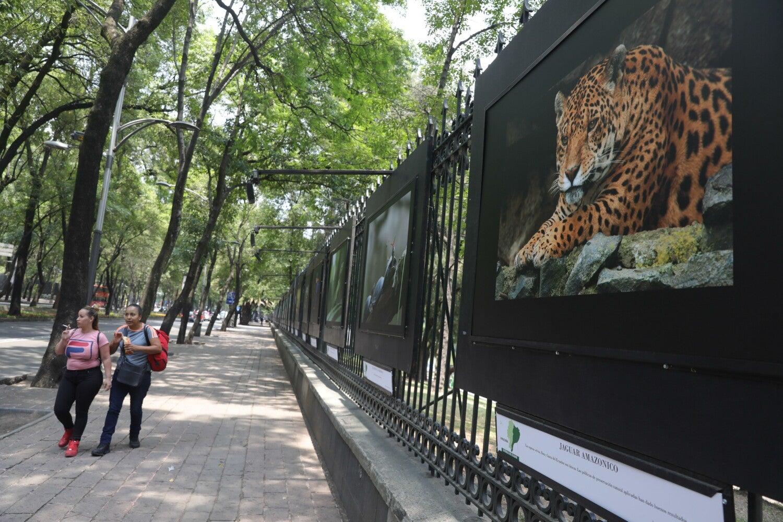 Ecuador se exhibe en el Bosque de Chapultepec