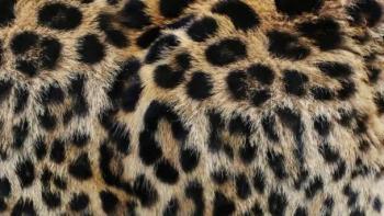 Formaliza el senador Monreal la iniciativa para prohibir uso de pieles de animales exóticos