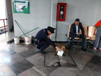 Policías de la PBI de la SSC apoyan en dos acciones diferentes en el rescate de dos perros