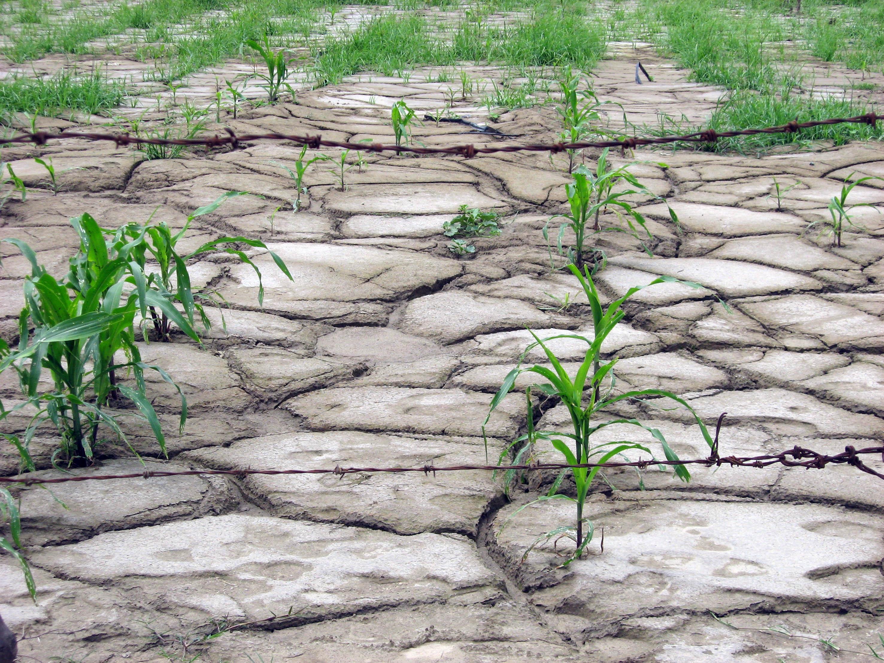México es uno de los Países con más degradación de suelos