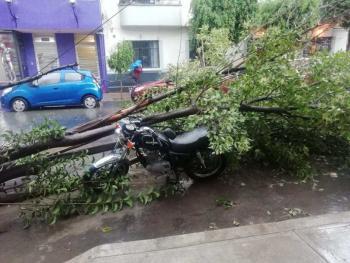 Atiende Gobierno capitalino 26 encharcamientos y 8 árboles caídos