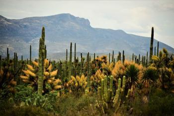 Saberes alimentarios del Semidesierto mexicano