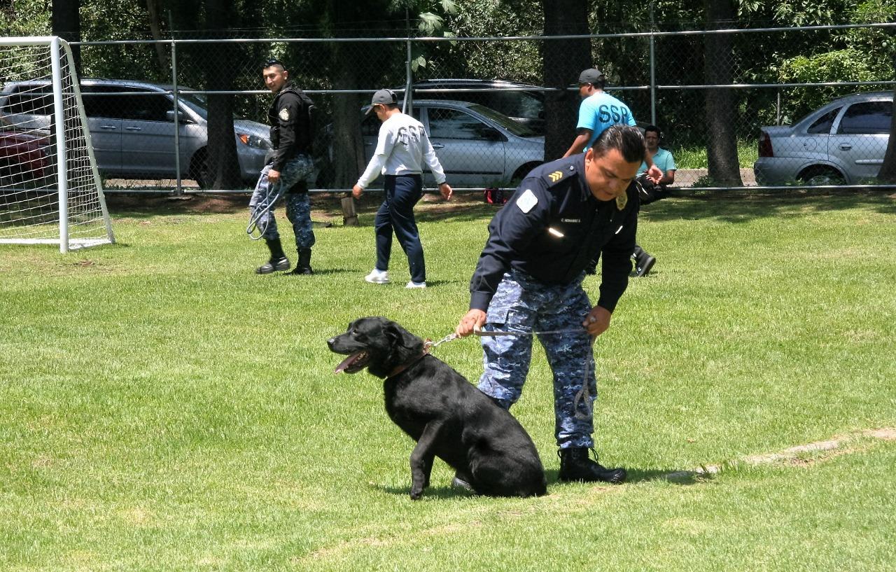 Brigada de vigilancia animal de la SSC celebró el día Internacional del Perro Callejero