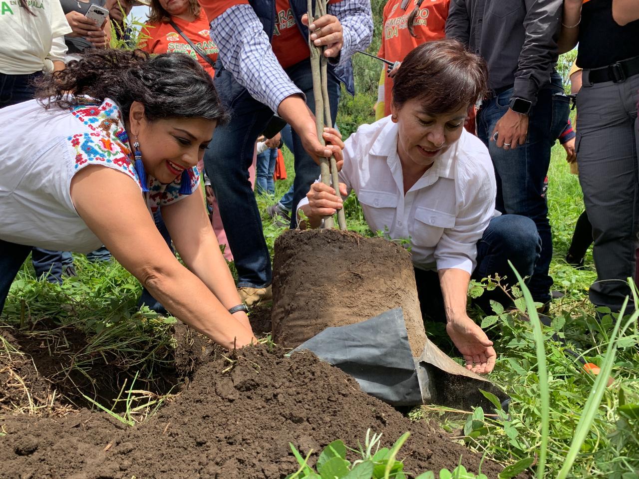 Inició Clara Brugada siembra de 80 Mil Árboles en la Sierra de Santa Catarina