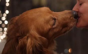 Besos de Mascotas pueden causar enfermedades