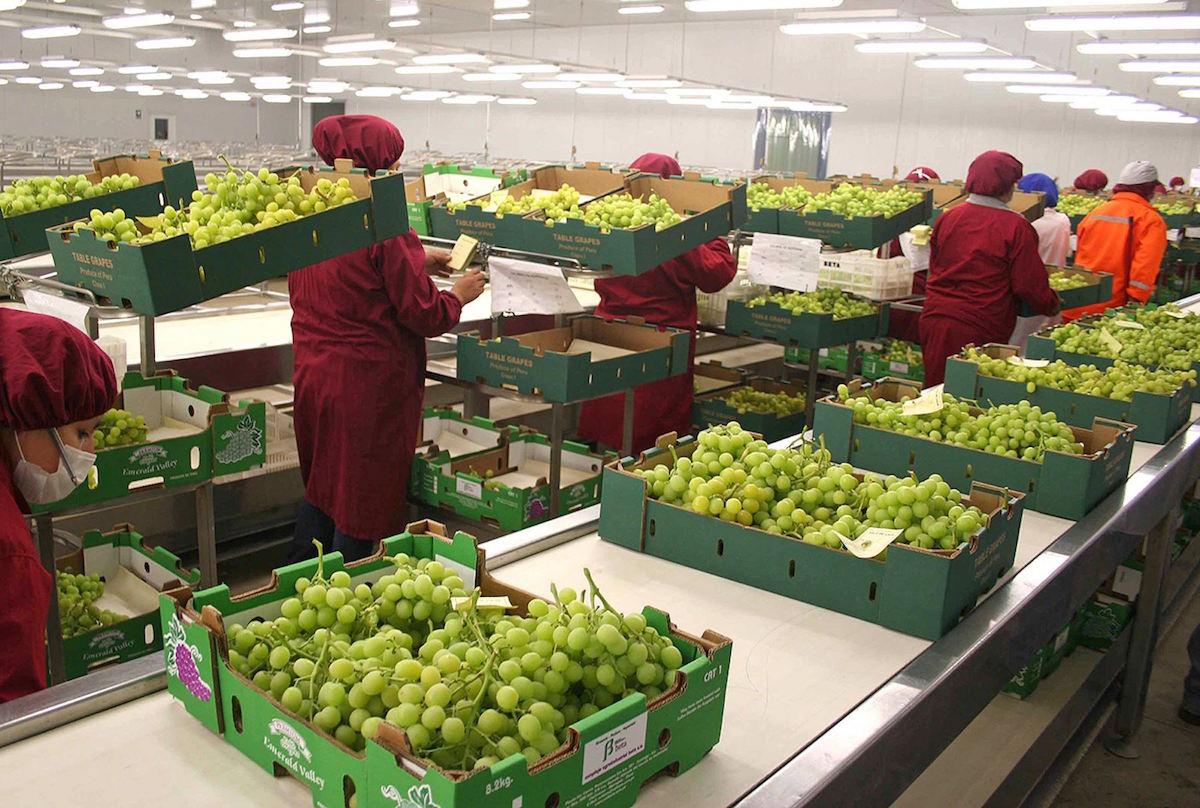 Registra balanza agroalimentaria de México superávit de 6,147 mdd en 1er semestre; incrementó en 28.4 por ciento con respecto al mismo periodo de 2018