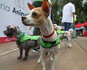 Con Feria Animalista Alcaldía Cuauhtémoc busca garantizar los derechos de los animales