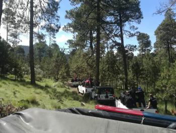 Tlalpan va contra la tala clandestina