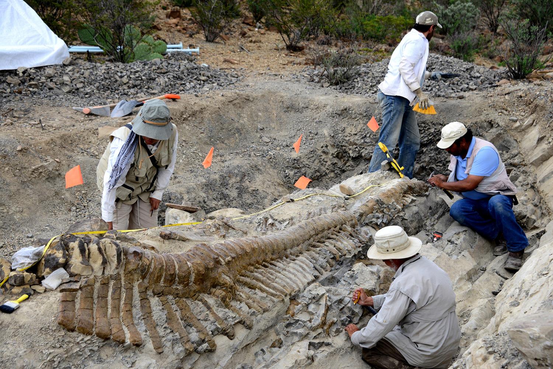El universo de los fósiles va a la ENAH en una jornada de divulgación del Consejo de Paleontología