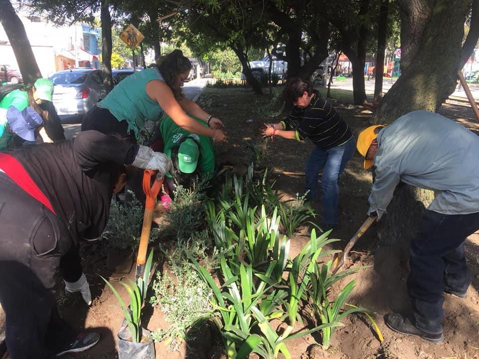 Más Áreas Verdes recuperadas con Sábado de Tequio y Reto Verde
