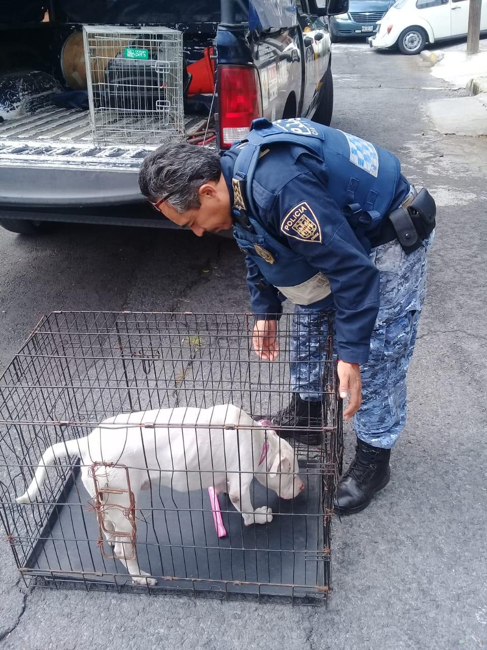 Brigada de Vigilancia Animal de la SSC rescató dos perros lesionados, una ave exótica y un tlacuache herido